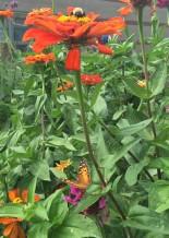 Butterflies all around!