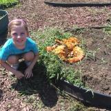 Replanting pumpkin seeds